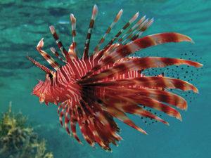neobychnaya-ryba-krylatka